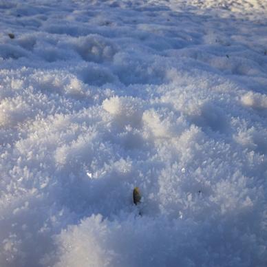 Nome: neve e gala.jpg Visite: 66 Dimensione: 90.7 KB
