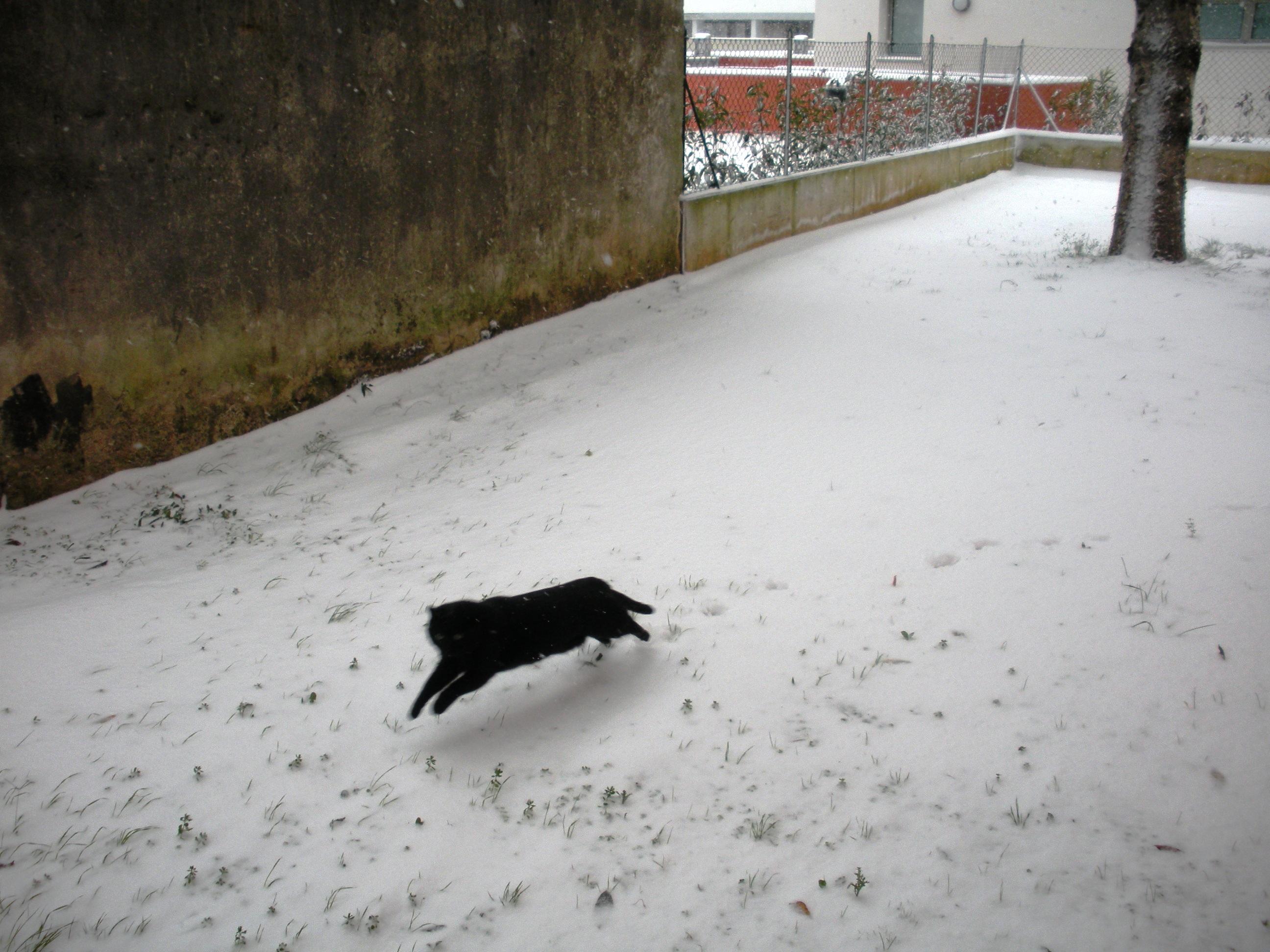 Clicca l'immagine per ingrandirla.  Nome: Nevicata 19 12 2009 (51).jpg Visualizzazioni: 109 Dimensione: 1.19 MB ID: 47982