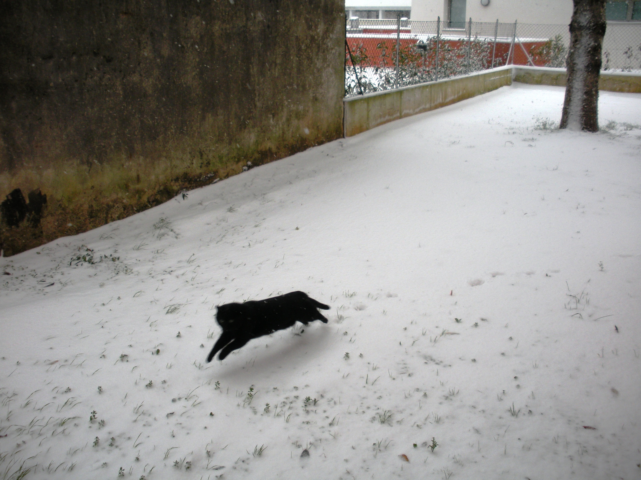 Clicca l'immagine per ingrandirla.  Nome: Nevicata 19 12 2009 (51).jpg Visualizzazioni: 103 Dimensione: 1.19 MB ID: 47982