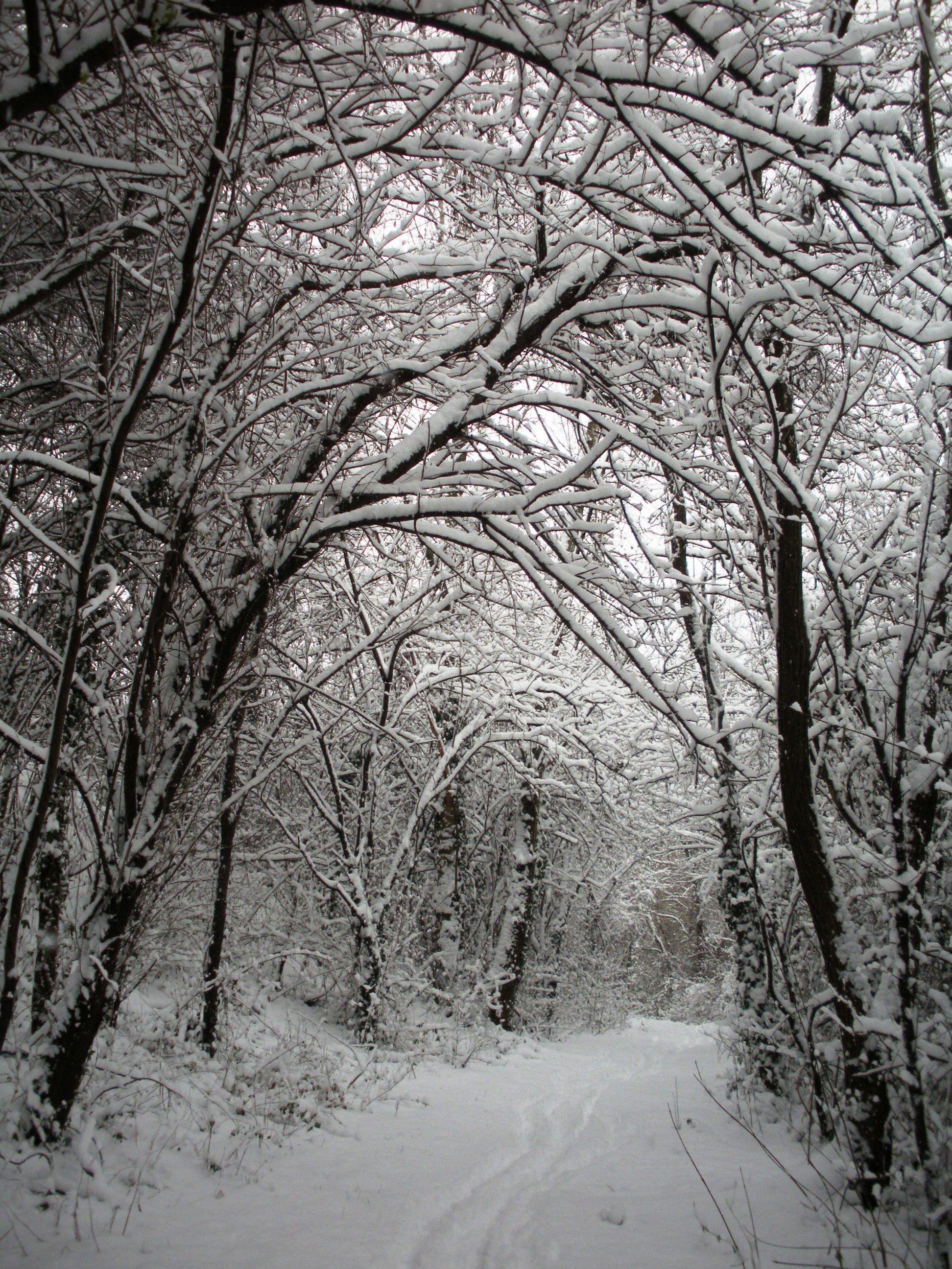 Clicca l'immagine per ingrandirla.  Nome: Nevicata 19 12 2009 (60).jpg Visualizzazioni: 89 Dimensione: 1.12 MB ID: 47984