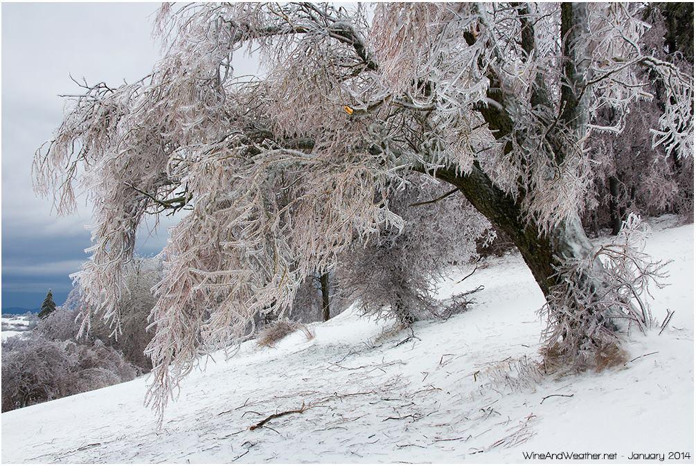 Clicca l'immagine per ingrandirla.  Nome: Banjška planota, wineandweather.net3.jpg Visualizzazioni: 38 Dimensione: 197.7 KB ID: 51905